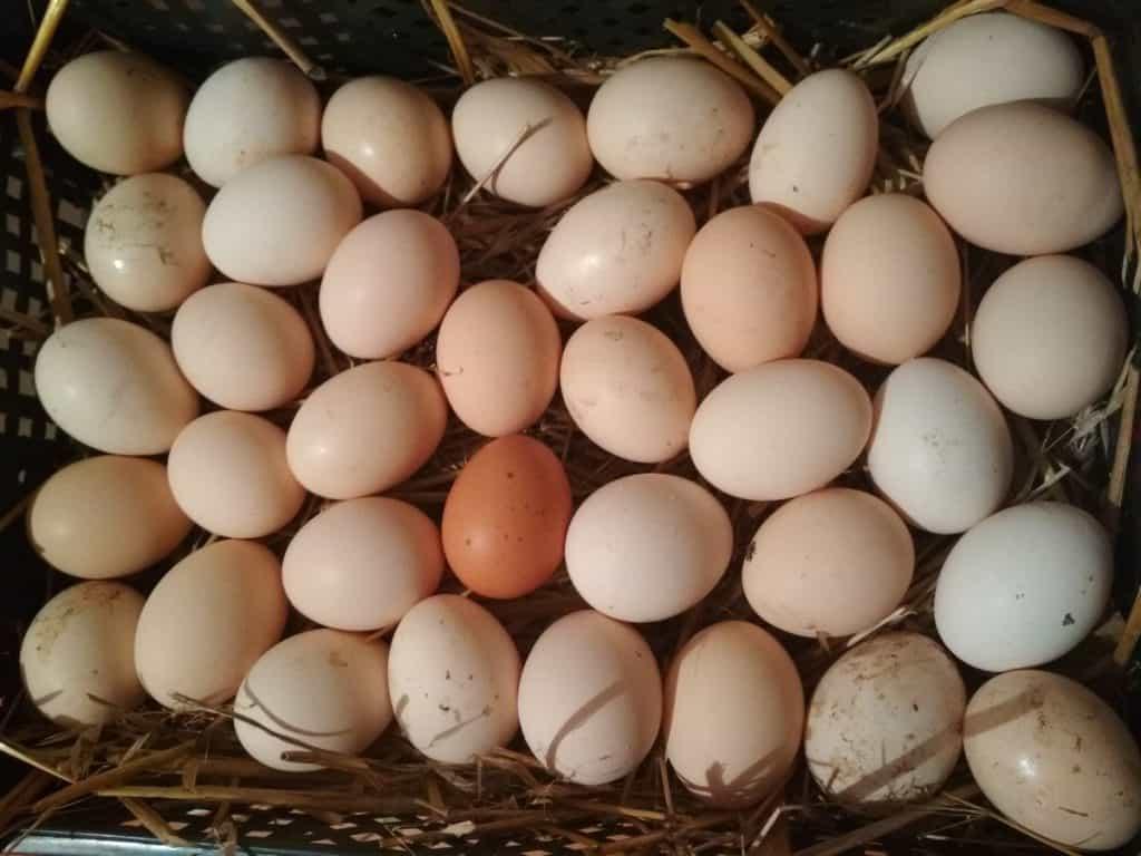 najlepsze zdrowe wiejskie jajka