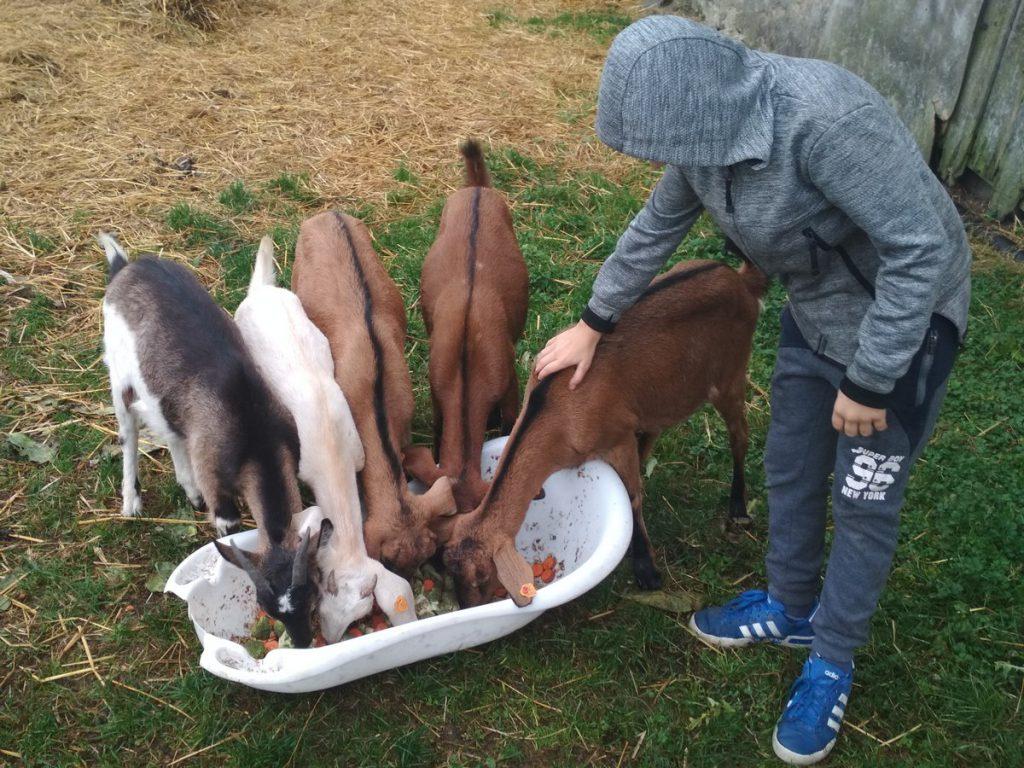 Wiktor i kozy 3