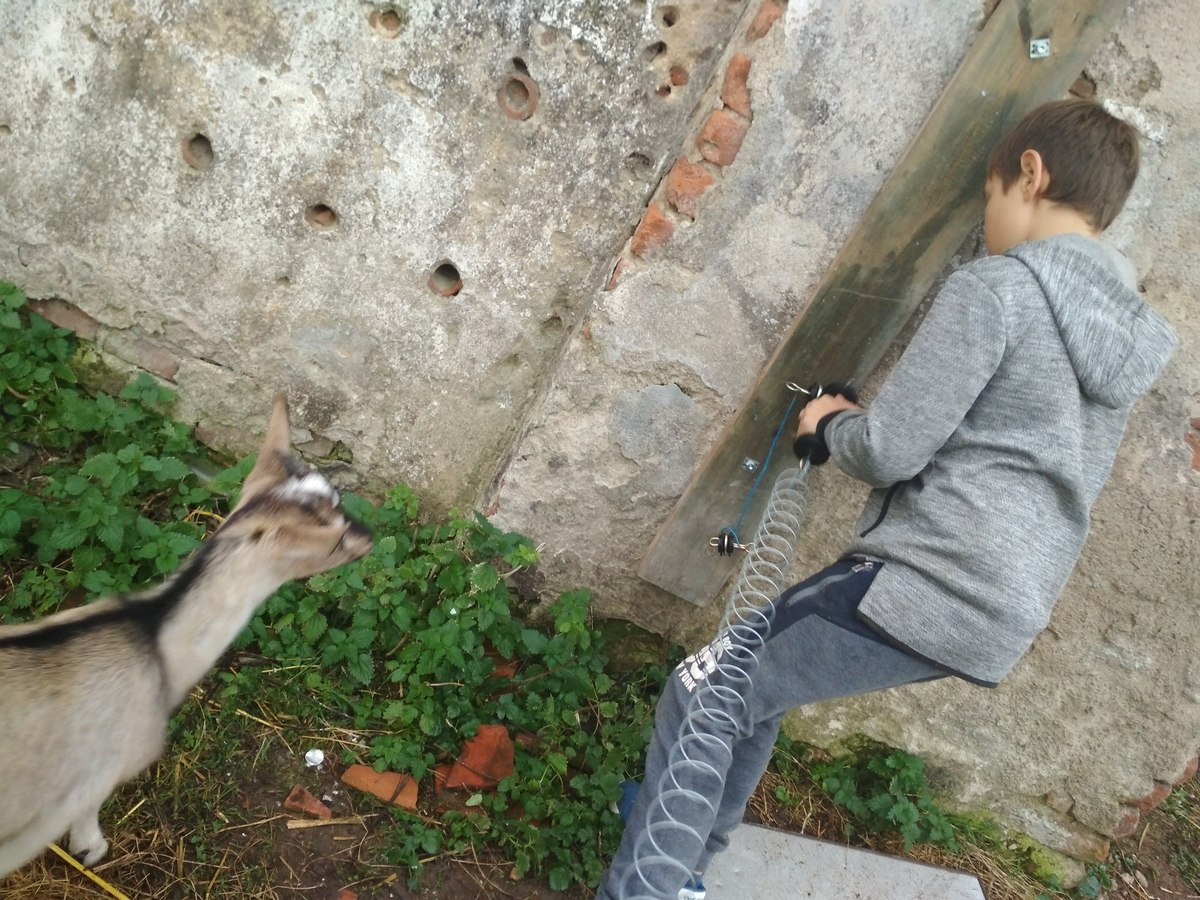 Wiktor i kozy 8