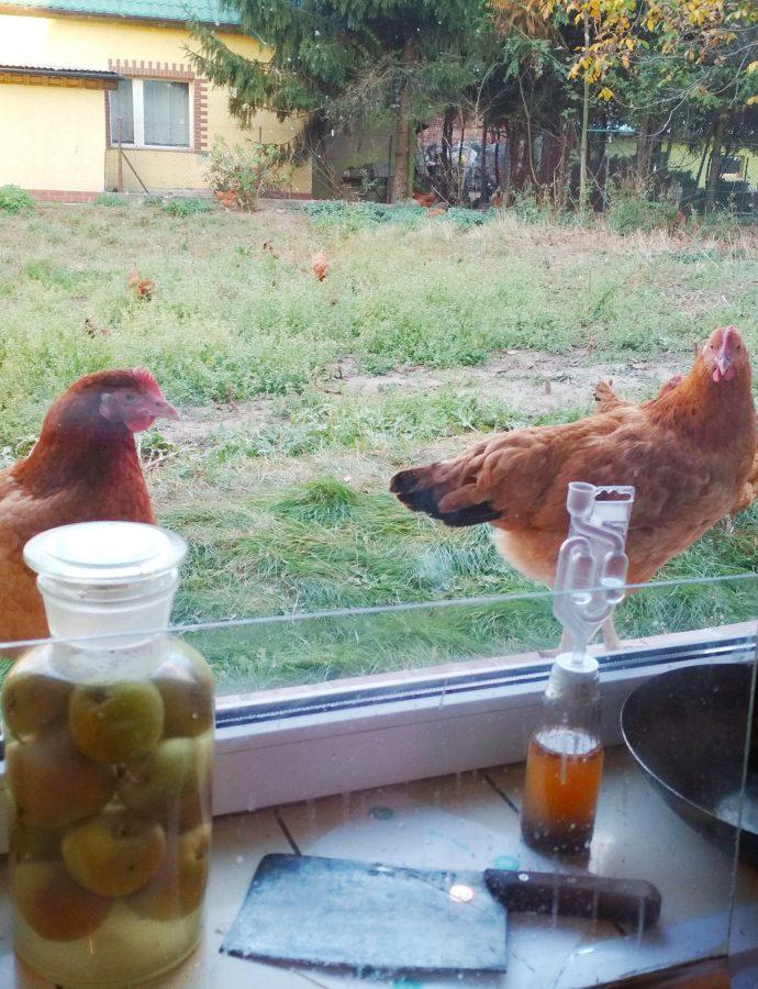 Bo kura to jest fajny ktoś!