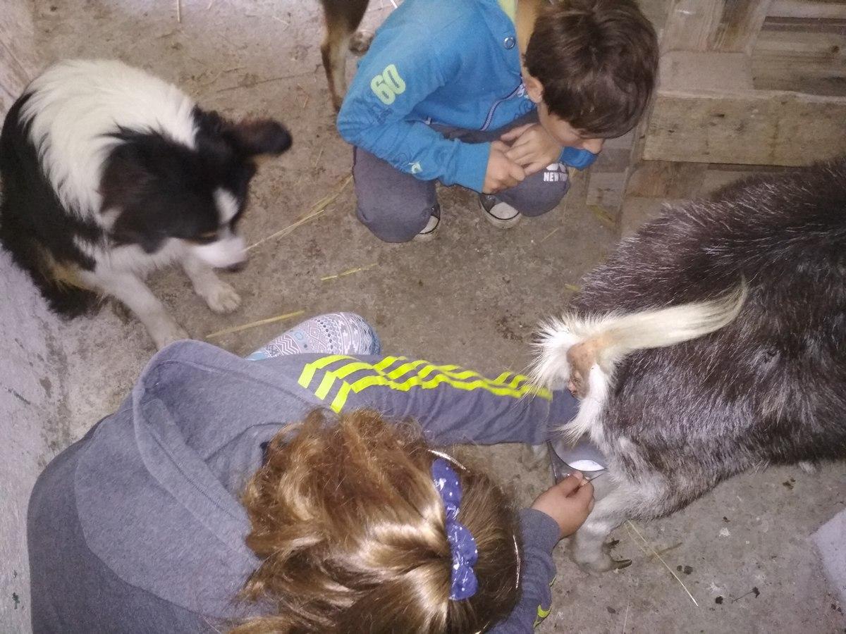 kinga i kozy 5