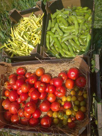 z miasta na wieś, warzywa prosto z pola, od rolnika, zdrowe