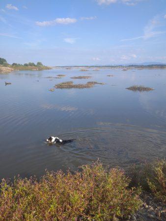 pływanie, psy, woda, lato, jezioro